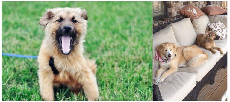 andie ariel rescue grass puppy