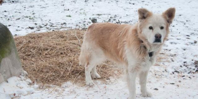 Help a Cold, Neglected Dog This Winter