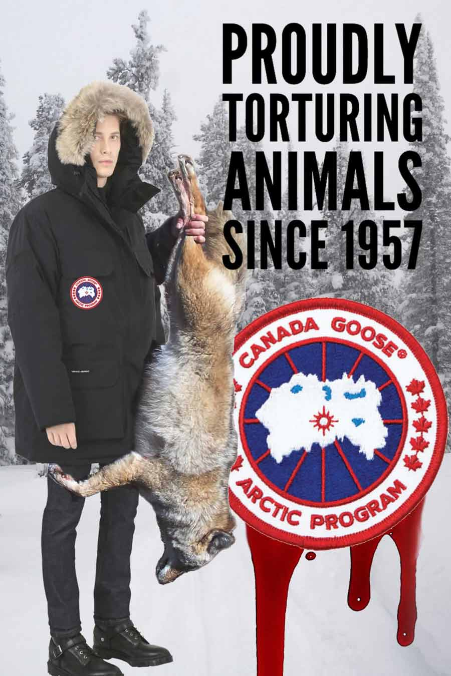 canada goose animal protection