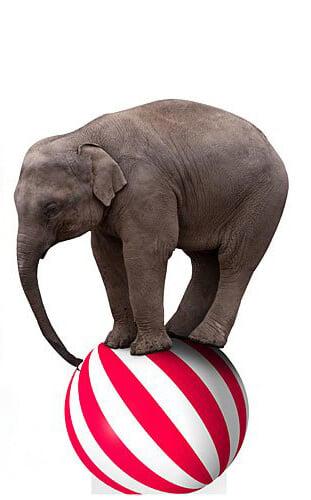 circus-party-prop-crop