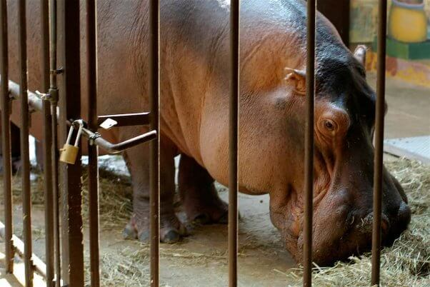 how to help animals in zoos