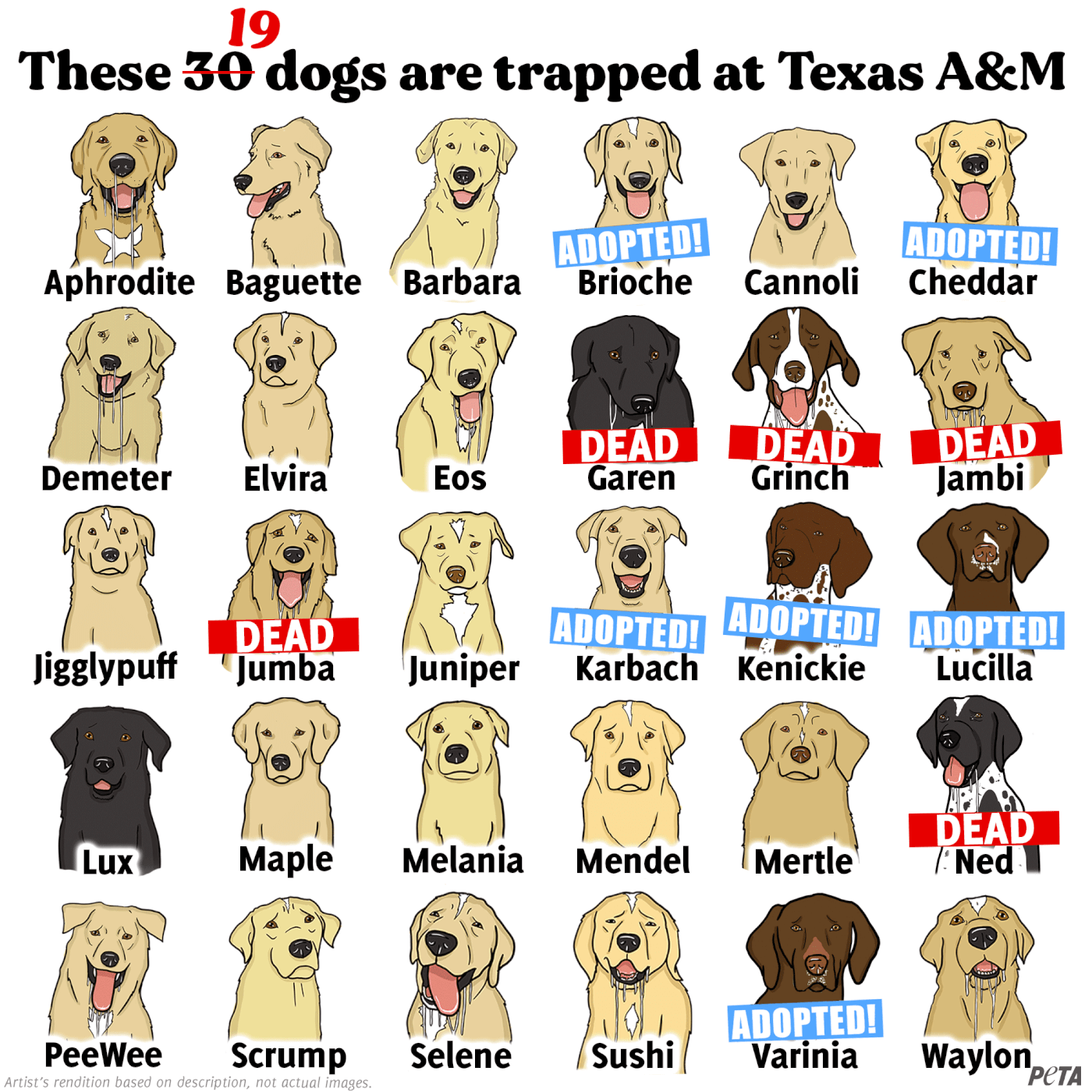 photo of graphic showing dogs
