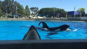 Pledge to Boycott SeaWorld!