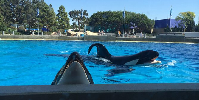 Alfonso Herrera Gives You an Inside Look at Suffering at SeaWorld