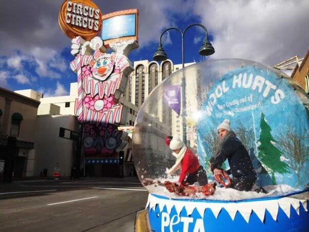 PETA anti-wool snow globe demo in Reno, NV