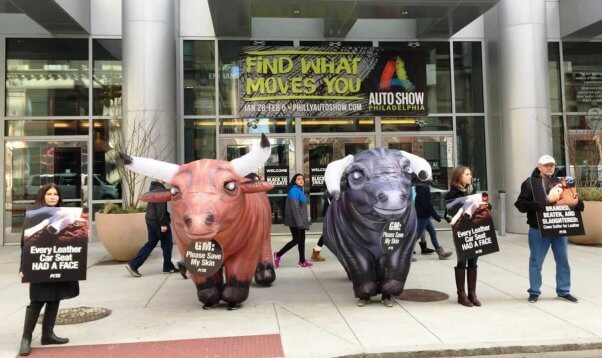 Two inflatable bulls flanked by protesters holding anti-leather signs