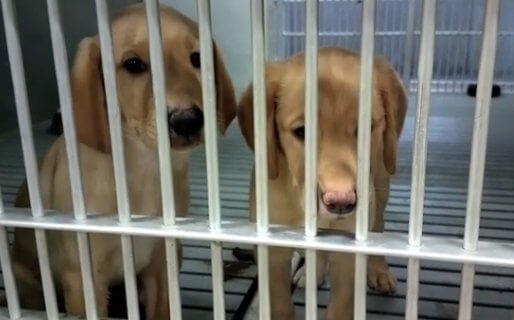 'The Suffering Is Real': Behind the Locked Doors of U.S. and French Dog Laboratories