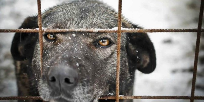 Protect Animals From Freezing Cold Temperatures This Winter