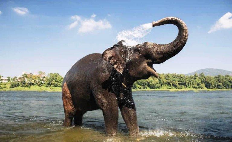 Happy Asian elephant in water
