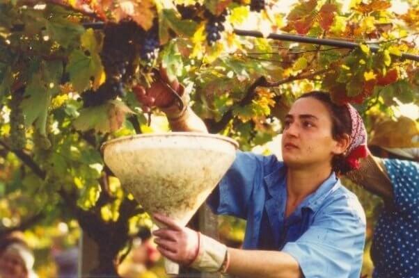 woman-making-wine