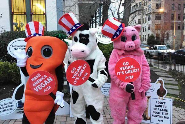 Cow, pig, and carrot mascots at 2017 inauguration