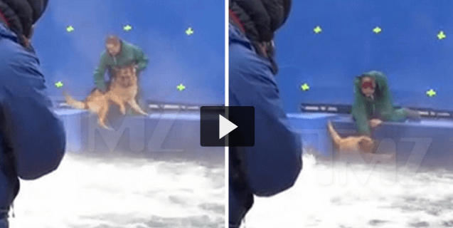 Being Terrified on Set Is NOT 'A Dog's Purpose'