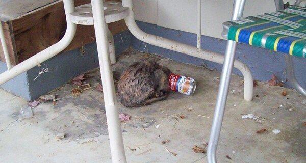 Horrific outside cat stories updated april 2018 peta previous next spiritdancerdesigns Images