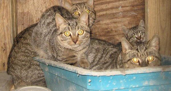 Horrific 'Outside Cat' Stories (Updated August 2019) | PETA