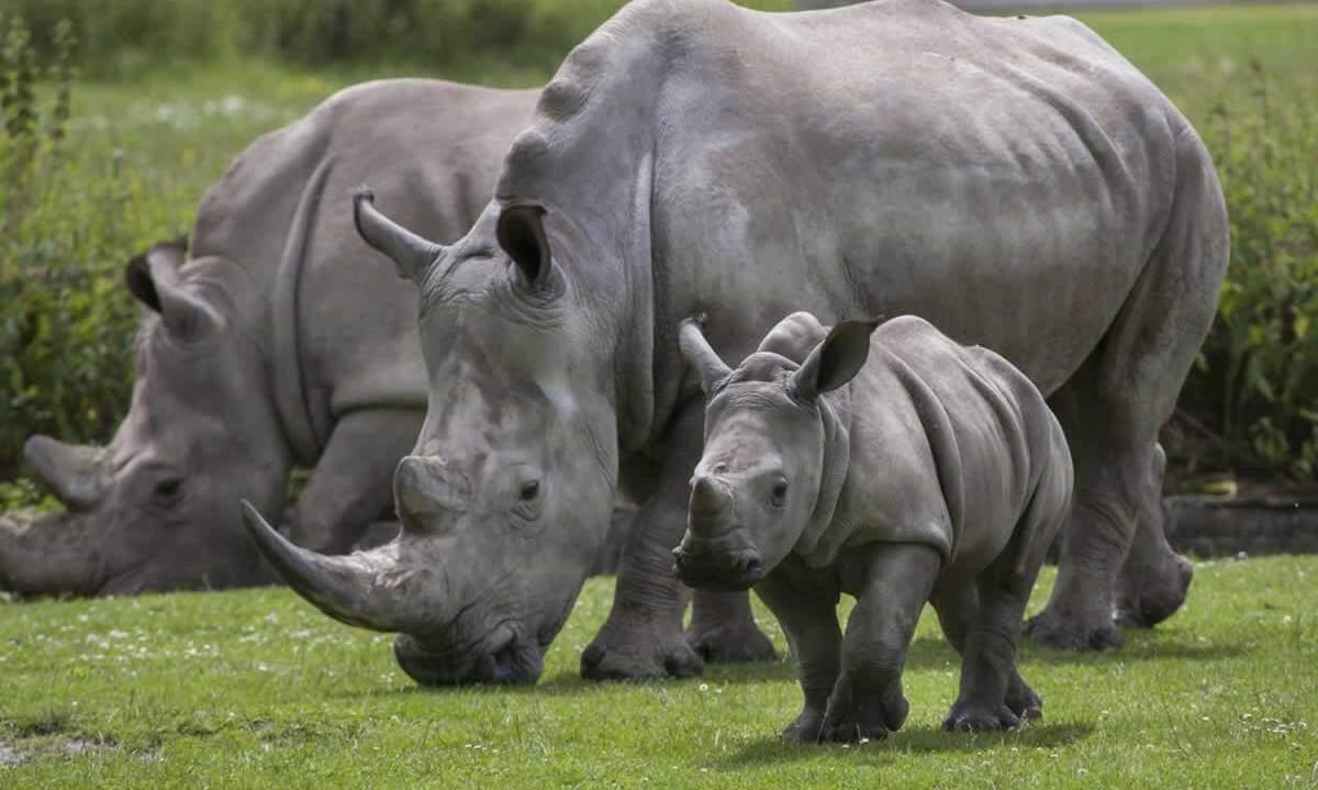 People Scratch Their Names Into Rhino S Skin Peta