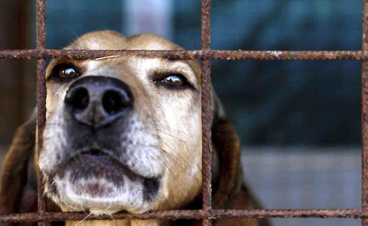 animal testing faq: beagles used in experimetns