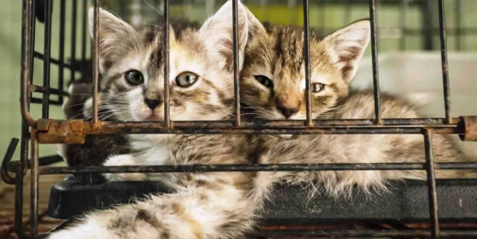 When Will People Learn? Another Scam 'No-Kill' Shelter Exposed