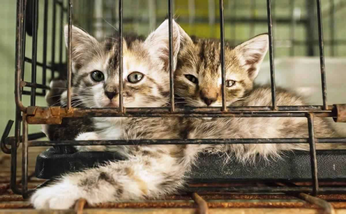 Two kittens in cage in shelter