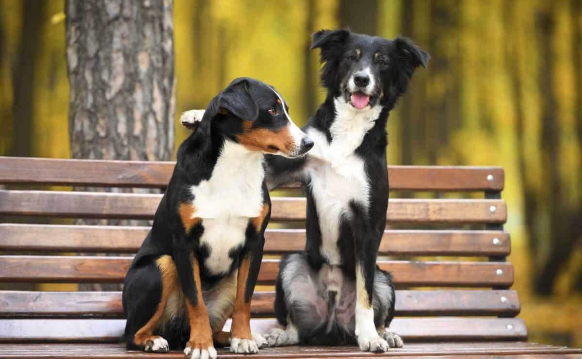 Dog on park bench with arm around dog friend