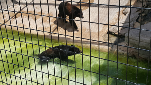 Spring River Zoo's Empty Promises Leave Animals to Suffer, but You Can Help!