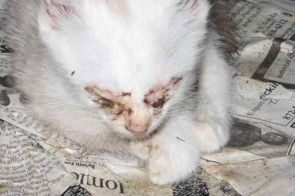 Horrific 'Outside Cat' Stories (Updated December 2017) | PETA