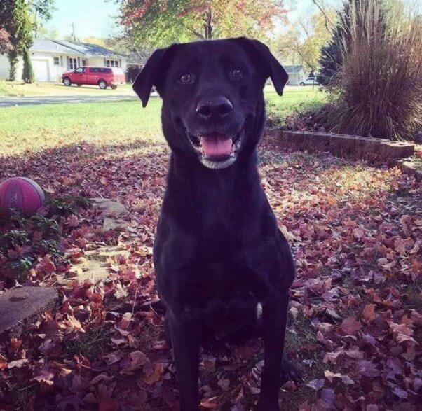 Happy black dog sitting in yard