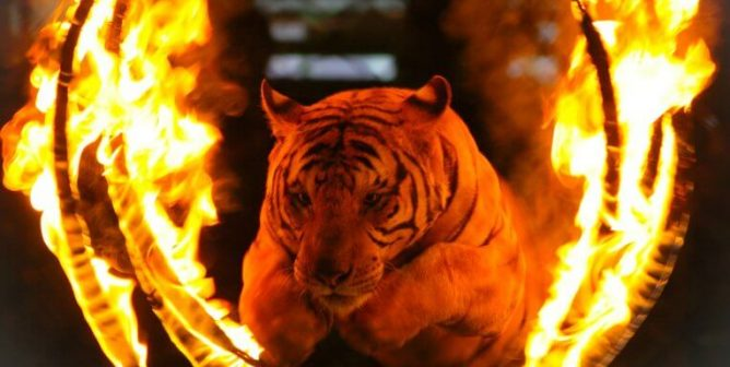 Animal-Abusing Circuses, Count Your Days—Another City Passes Ban