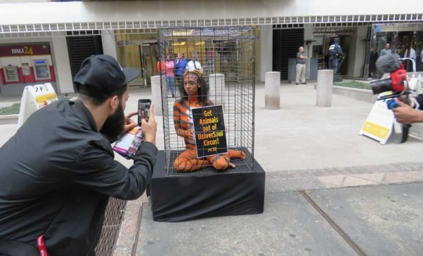 Man photographing PETA supported bodypainted as 'tiger'