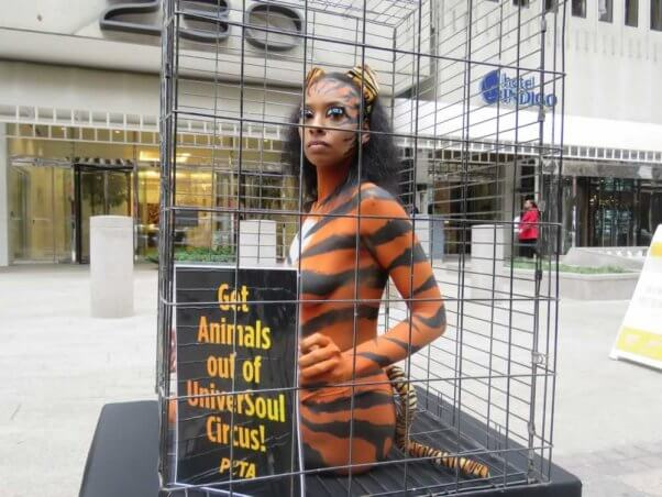 Close-up of PETA supporter bodypainted to look like caged 'tiger'