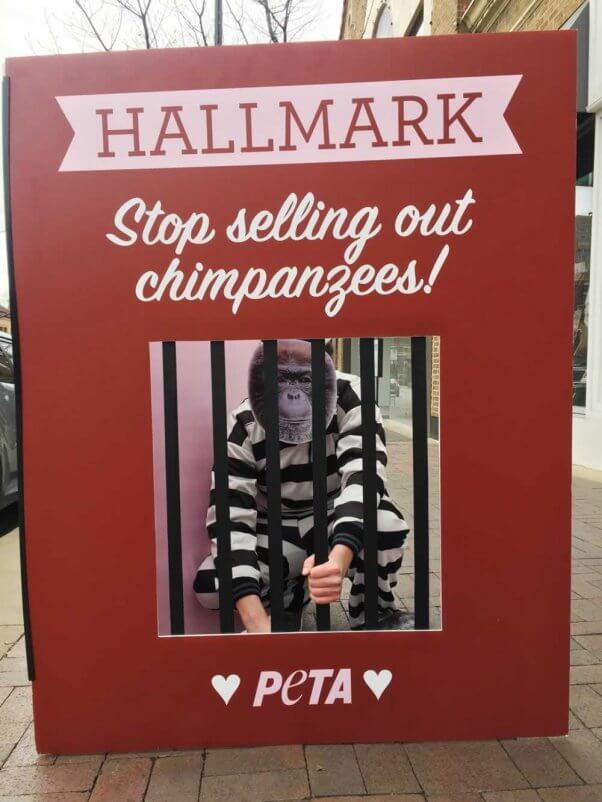A PETA supporter dressed as a chimpanzee behind bars