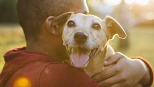 13 Things You Can Do to Find Your Lost Dog or Cat