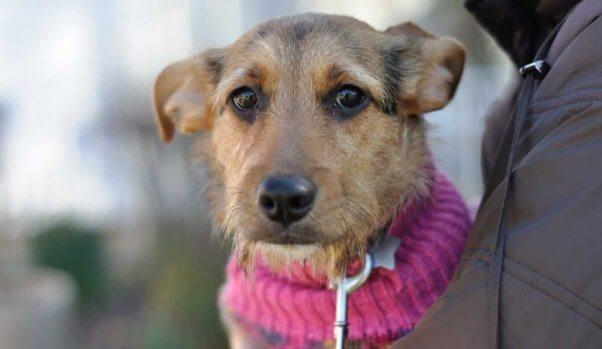 Close-up of Bridgette in a pink sweater