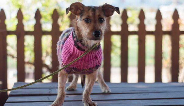 Bridgette in pink sweater on porch