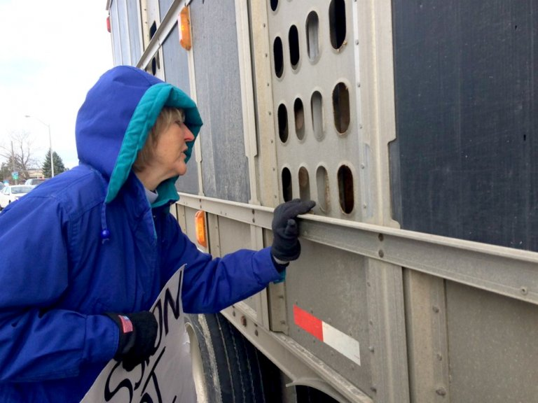 Ingrid Newkirk with Pigs in Truck