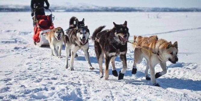 Victory! Wells Fargo & Guggenheim Partners End Iditarod Sponsorships