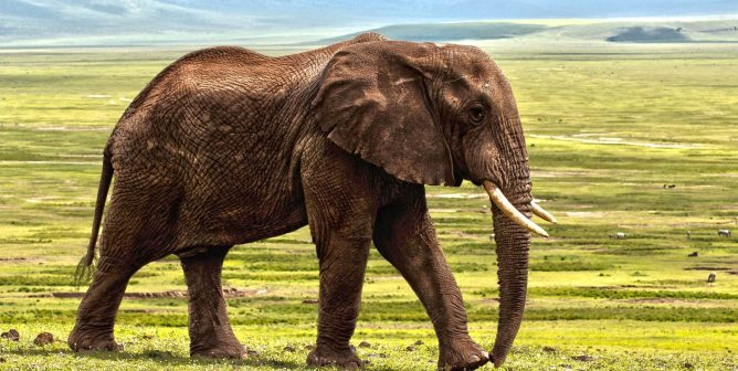 Three Years Ago Today, Ringling Announced It Would End Elephant Acts