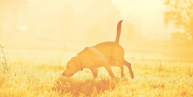 USDA Wildlife Services' Cyanide Bomb Kills Dog and Injures Teen