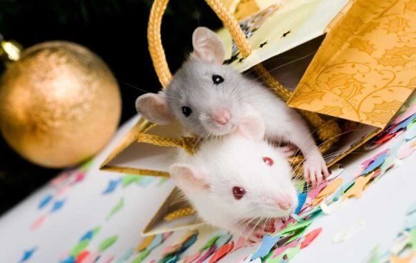 Two cute mice in Xmas gift bag with ornament in background