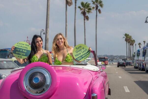 lettuce ladies cuba trip: pink classic car