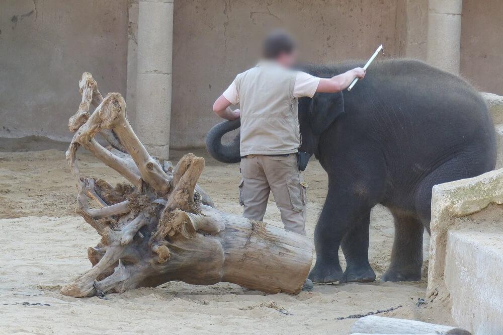 Hannover-Elephant-investigation