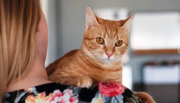 Pumpkin, a kitten in need of a home