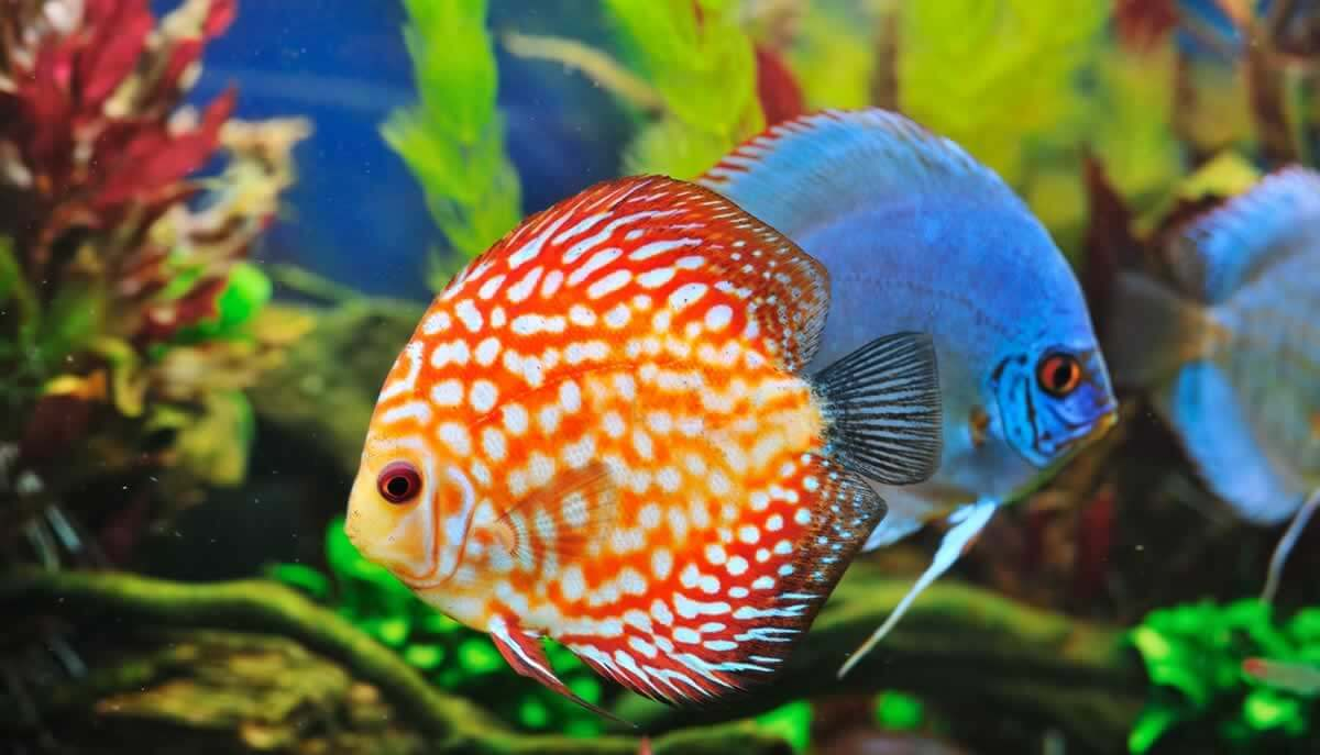 Pretty orange-and-white fish