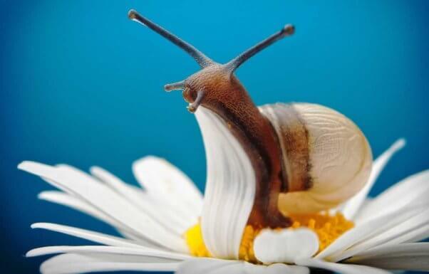 Close-up of snail on daisy