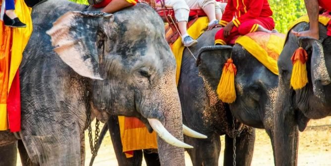 10 Reasons Why You Should Say No to Cruel Elephant Rides