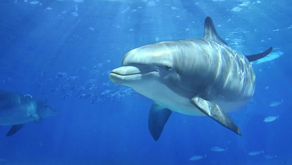 Dozens of Dolphins and Whales Have Died at Marineland Canada—Take Action Now