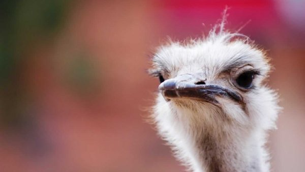 Urge Gucci, Prada, and Louis Vuitton to Ban Ostrich and Other Exotic Skins!