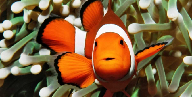 Inspiring Rescue Videos to Teach Compassion for Fish