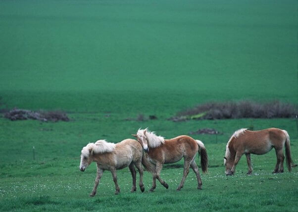 Three horses in a green pasture.