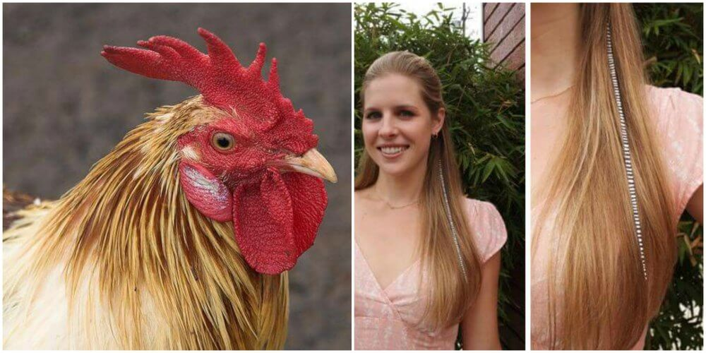 The Cruel Truth Behind Feather Accessories Peta