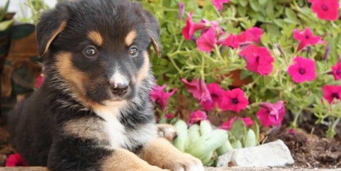 Finding Animal-Friendly Housing